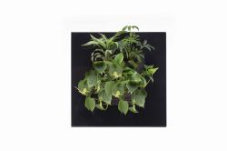 Decoratiuni casa Tablou plante vii LivePicture GO negru