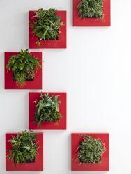 Decoratiuni casa Tablou plante vii LivePicture GO rosu